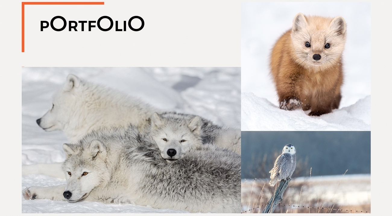 3 animals on picture for portfolio